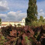 Morella Wineyard