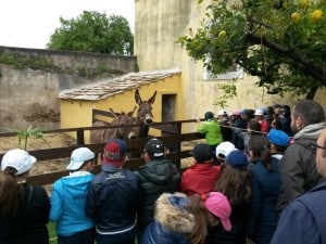 Scolaresca in visita presso la Fattoria Didattica Agriturismo La Morella