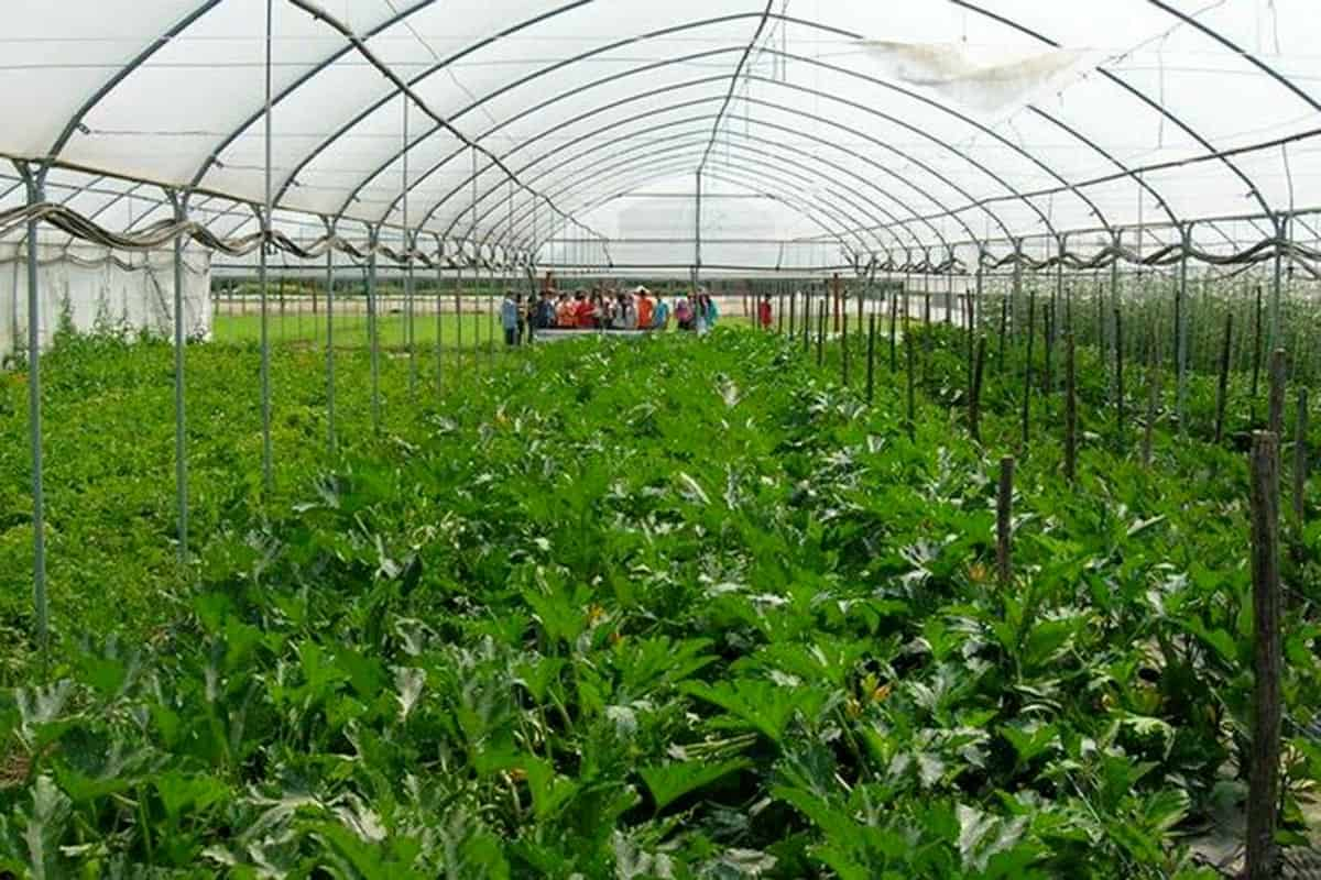 La fattoria didattica La Morella