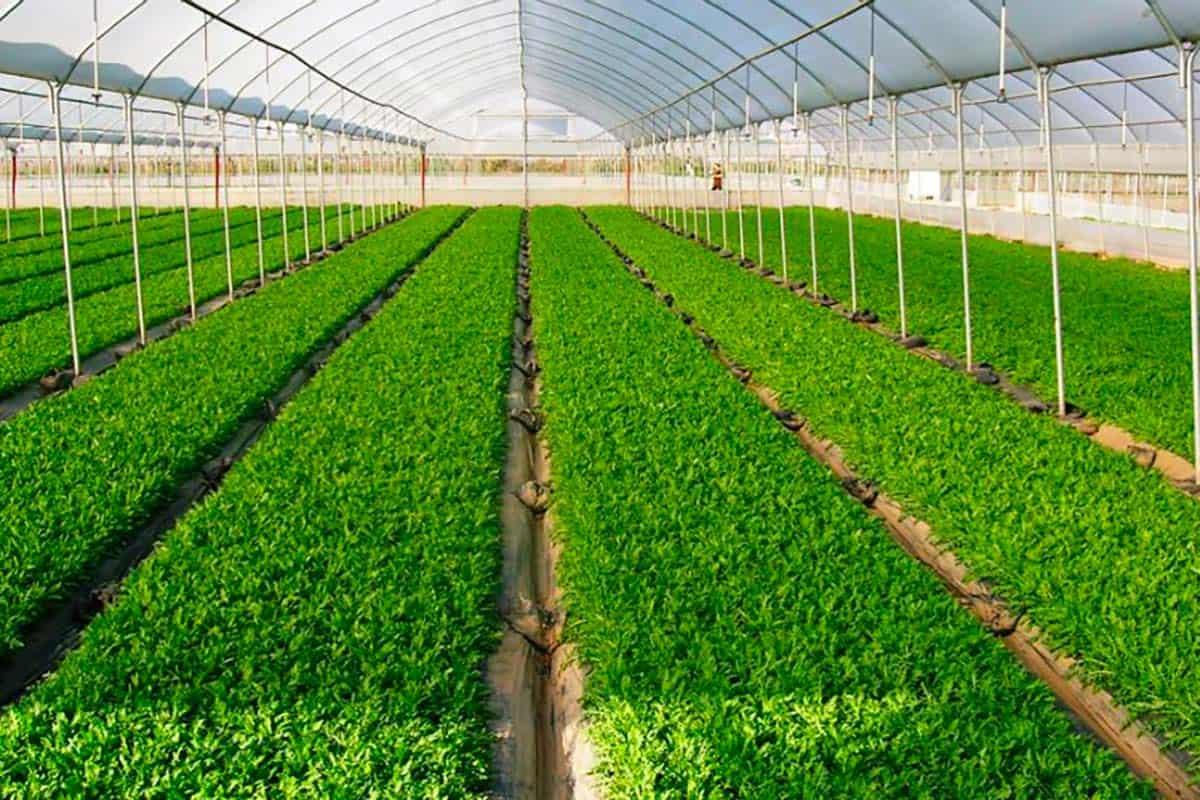 Le produzioni agricole de La Morella